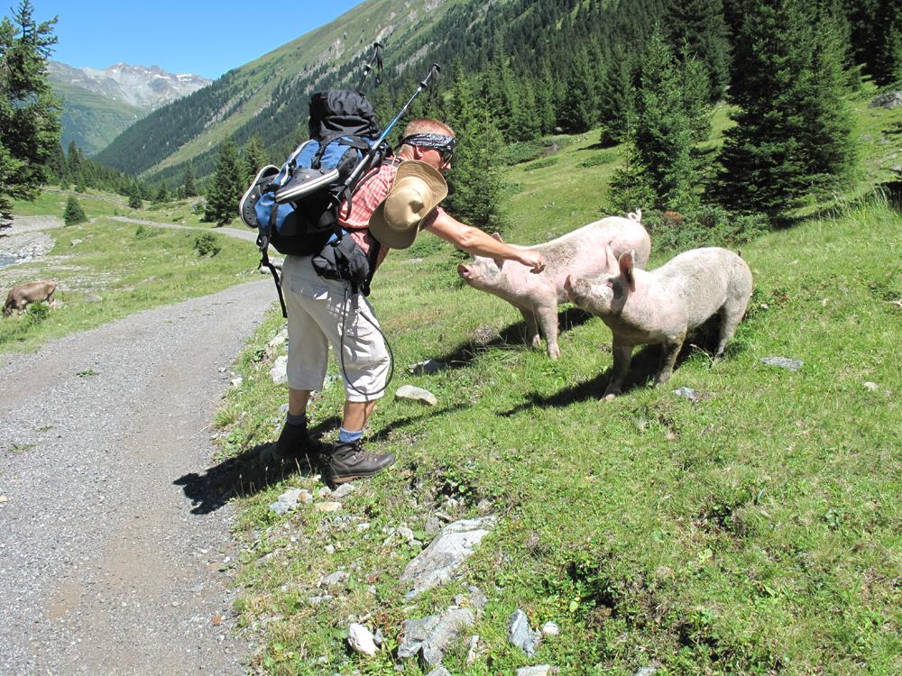 Bergschweine